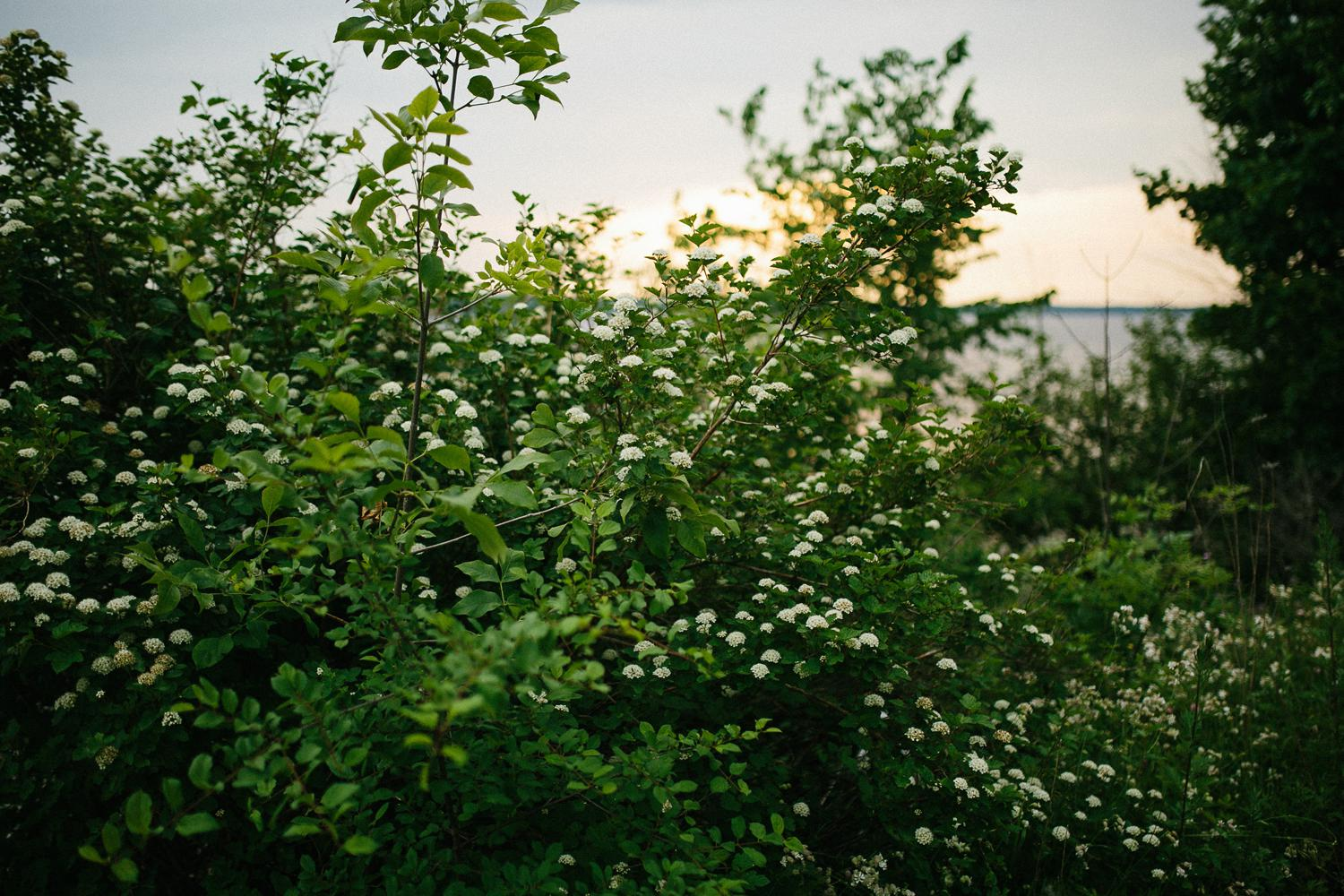 ottawa river small intimate wedding-187.jpg